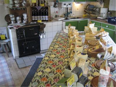 Cheese on display in a kitchen.