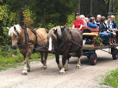 Horse and carriage or sleigh in Tolg