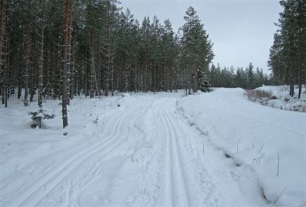 Ski trails in the forest.