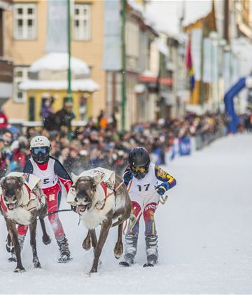 Sami week with Norwegian Championship in reindeer racing and lasso throwing