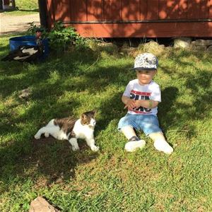 Little boy is sitting in the grass next to a cat.