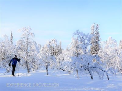 A a cross-country skier in a winter landscape.