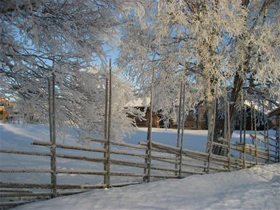 Winter landscape with snow-covered fence and birches.