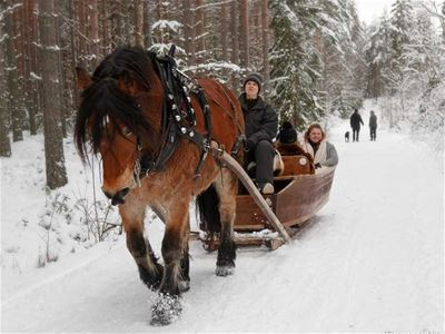 Horse with sleigh.