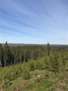 Mile-wide view over the forrest-