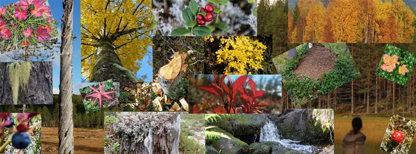 Collage of pictures on flowers, leeves and trees in the autumn