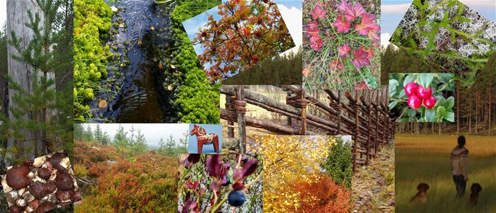 Collage of pictures on flowers and a dalecarlian fence.