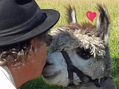 Man kisses an alpaca on the nose.