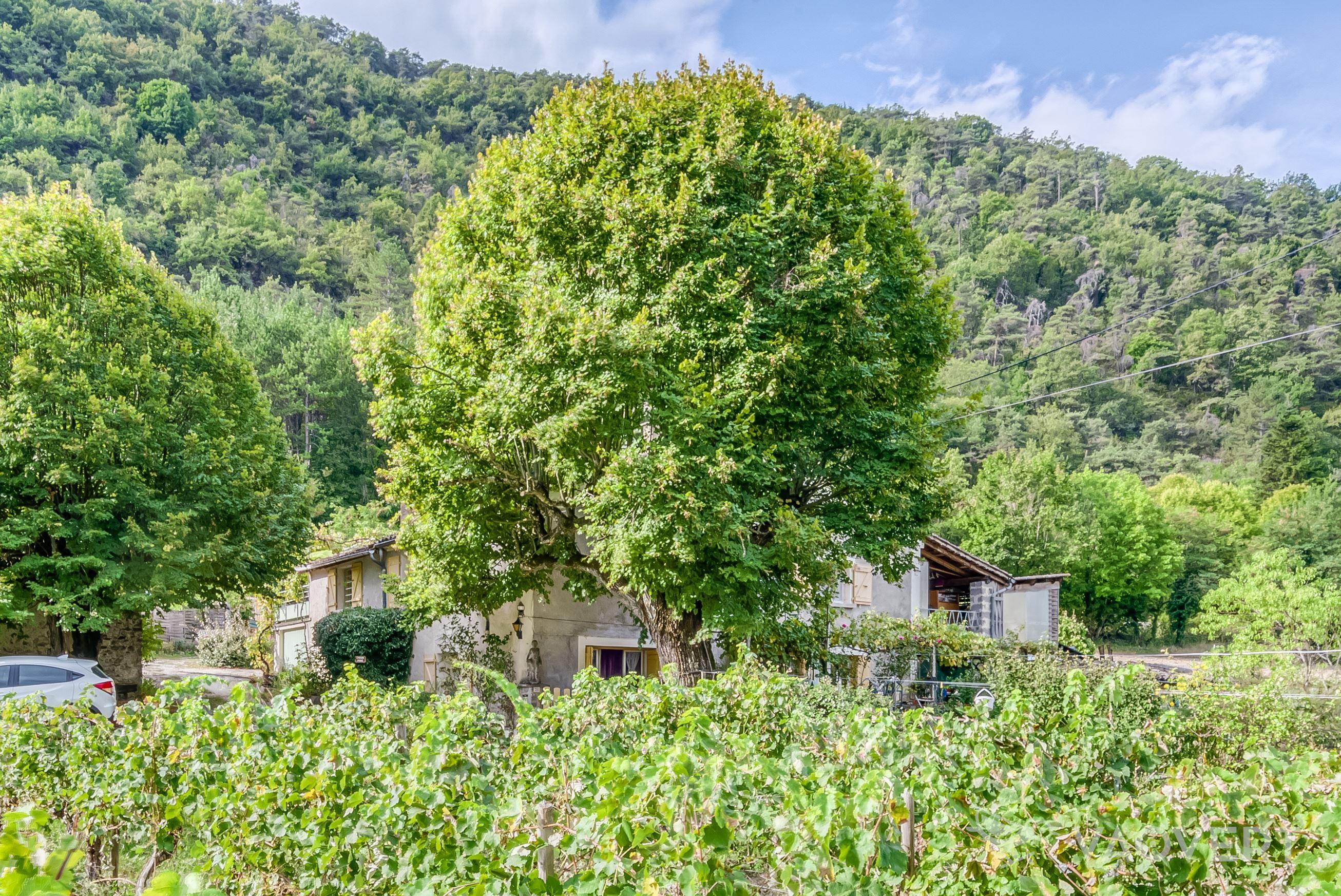 Une oasis au milieu des vignes