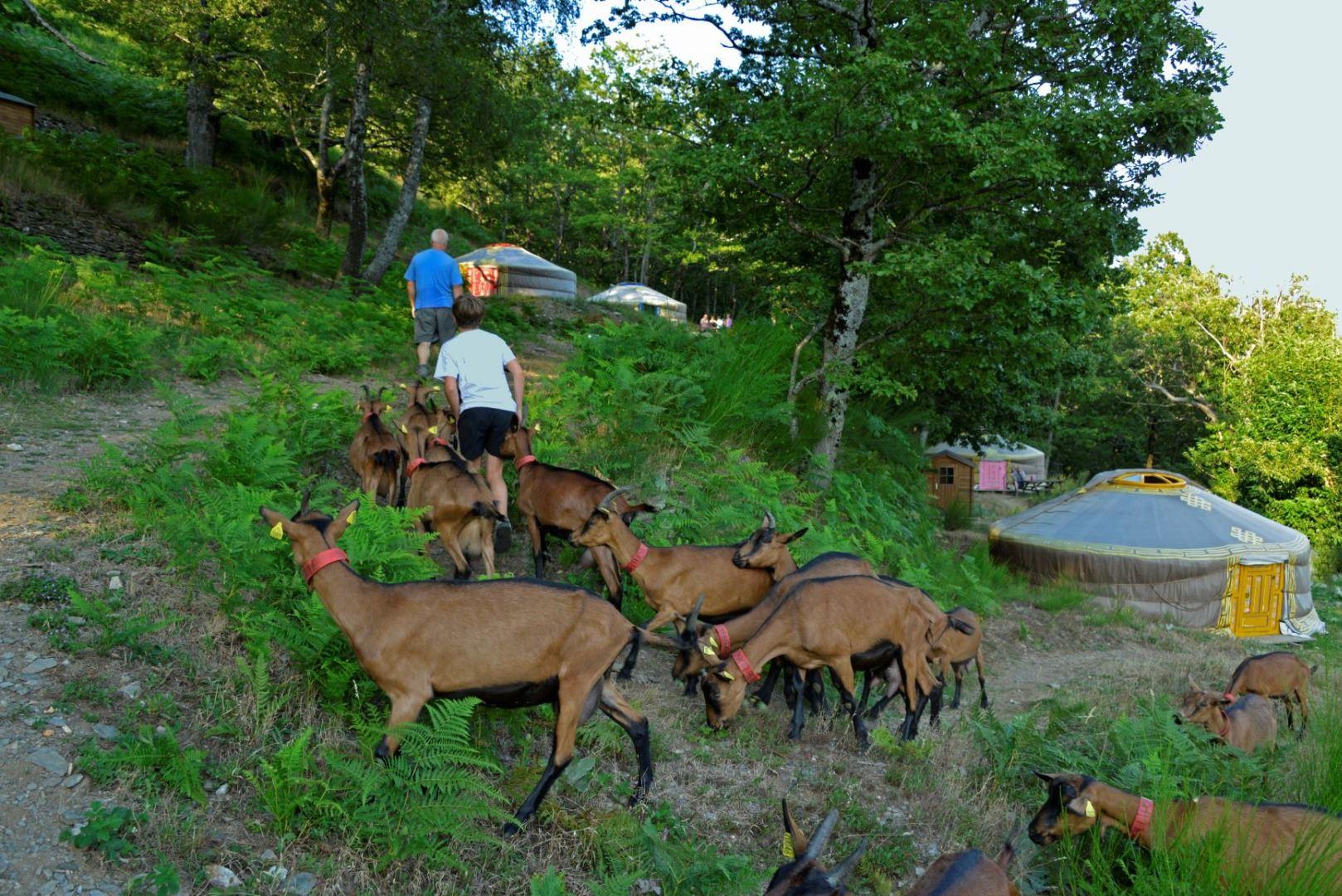 La Chèvrerie des Felges en Cévennes